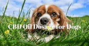 Hempstrax CBD Oil for dogs