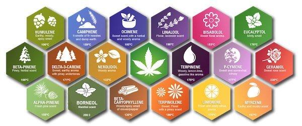 Flavor Profiles of Terpenes Found in CBD Hemp