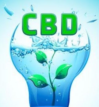 CBD Water with hemp plant