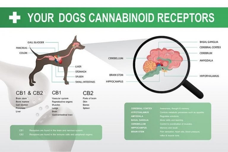 CBD Water for Dogs Dosage Guide