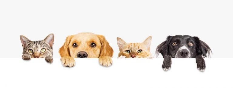 Pros and cons of CBD for Dogs and Cats