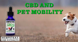 Improved Dog Mobility with CBD